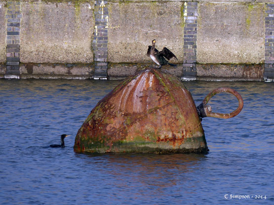 An image of the buoy with a bird on top
